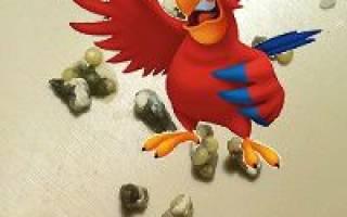 Рвота у волнистого попугая что делать