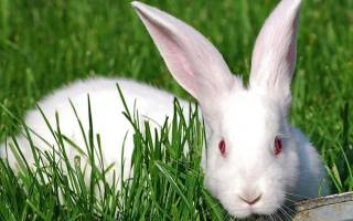 У кролика запор