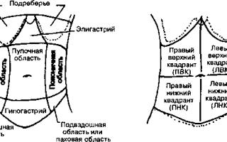 Расположение внутренних органов человека в брюшной полости рисунок