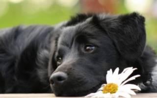 Язвы на животе у собаки