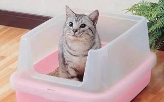 Запор у кошек при глистах