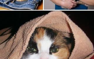 Запор у котенка 1 месяц что делать
