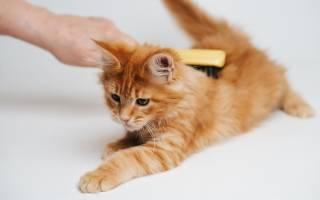 Запор у котенка 2 месяца