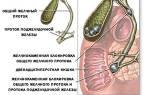 Холецистит желчекаменная болезнь