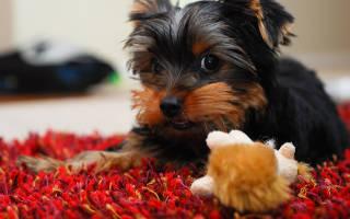Запор у щенка 1 месяц
