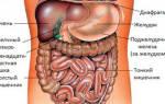 Как выглядит желудок